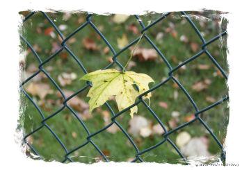 Lövet i staketet